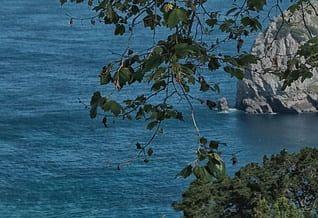 Posicionamiento web Euskadi