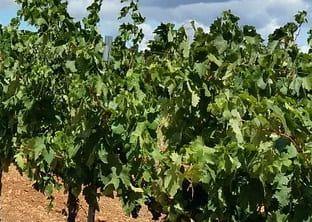SEO Rioja